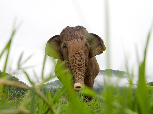 6-chiang-mai-gallery-elephant_36488_600x450