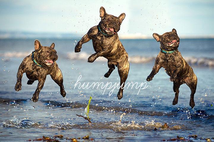 Photo Credit: Brighton Dog Photography