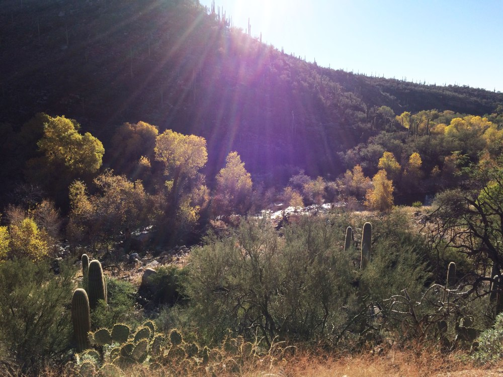 Sabino Canyon this morning