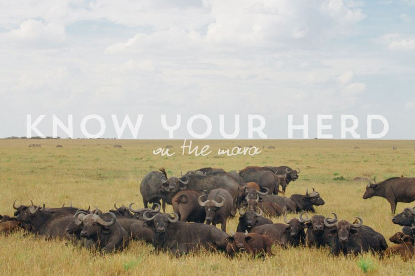 11---know-your-herd