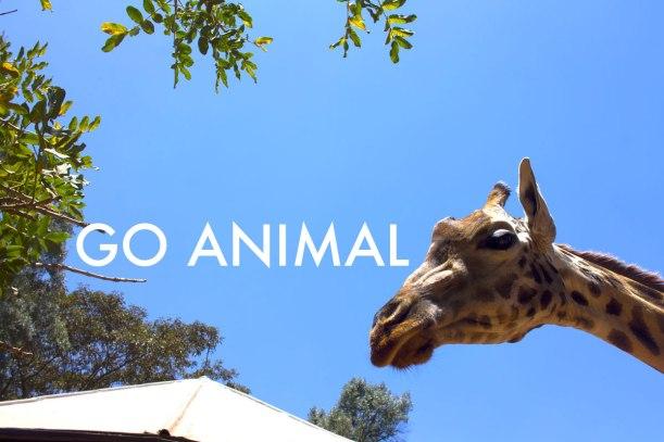 Go-Animal