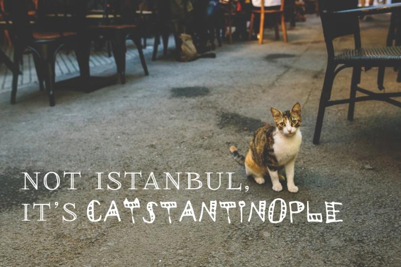 14---Catstantinopple
