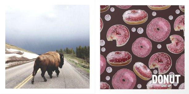 buffalo-and-donut