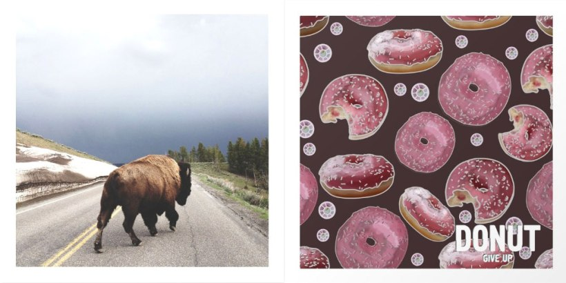 buffalo-and-donut